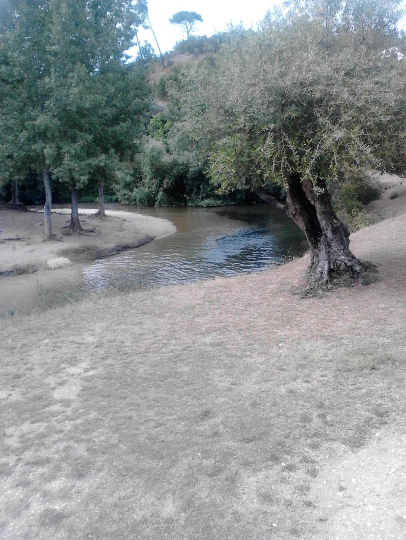 Fotos Telemóvel 1337